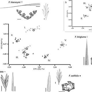 (PDF) Multivariate Analysis and Taxonomic Delimitation