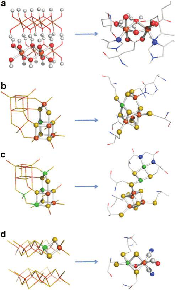 medium resolution of structural comparisons between transition element sulfides and oxides of the kind found in the precipitate membranes