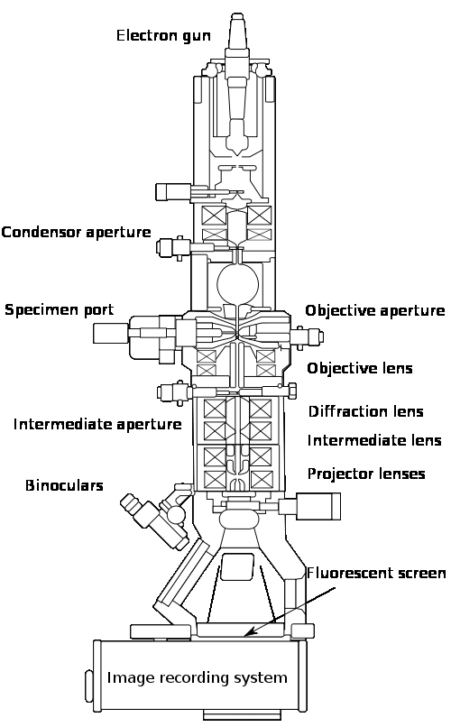 2 (a) The schematic diagram of a transmission electron