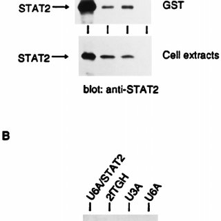 Summary of the structures and activities of STAT1-STAT2