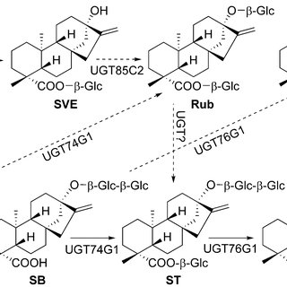 (PDF) The steviol glycosides of Stevia rebaudiana