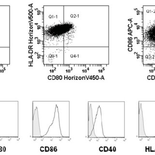 An example of phenotype (expression of CCR7, CD83, CD80