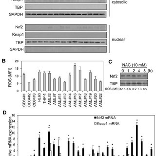 High Nrf2 protein in human AML cells is because of
