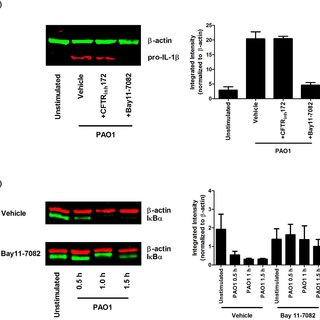 PBMCs from CF patients (n = 17–20) and healthy controls (n