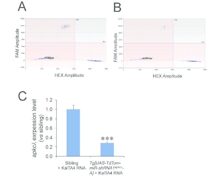 Figure S5 Droplet Digital PCR analyses of endogenous apkcλ