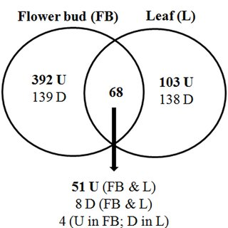 venn diagram of transverse and longitudinal waves wiring for wall lights pdf grafting triggers differential responses between scion showing differentially expressed genes in flower bud leaf vs rootstock