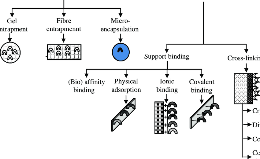 Classification of traditional enzyme immobilization