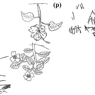 (PDF) LESSONS FOR TEACHING BOTANY: WHAT MIDDLE SCHOOL