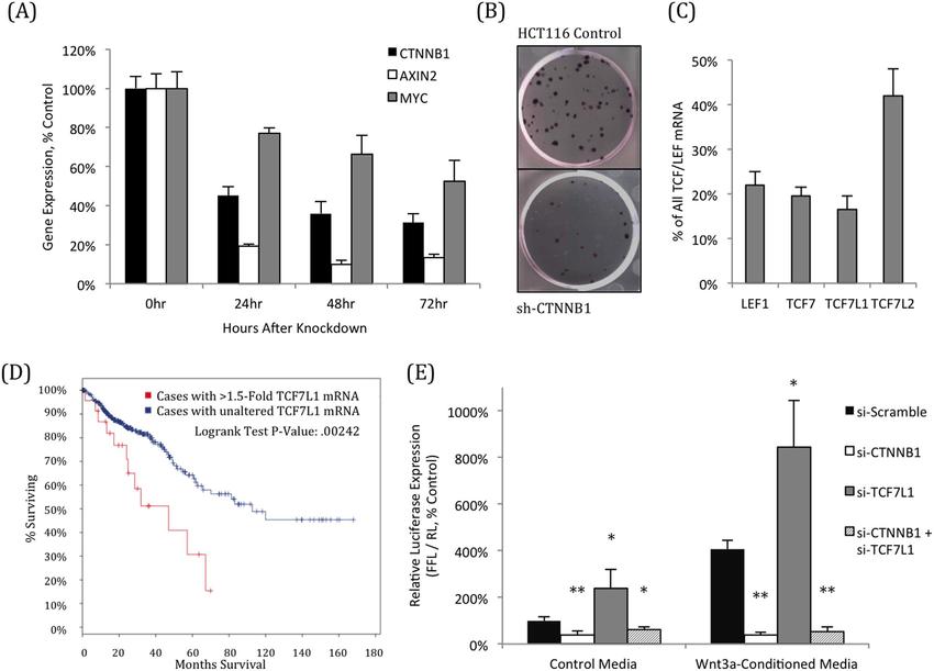 TCF7L1 represses Wnt-dependent transcription in HCT116