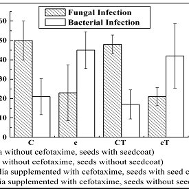 2: Influence of seed coat and cefotaxime on the extent of