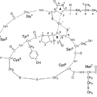 1 Pathway of methane metabolism by methanotrophic bacteria