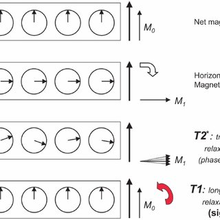 (PDF) Principles of Functional Magnetic Resonance Imaging