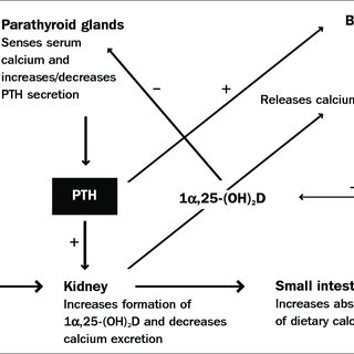 (PDF) Vitamin D in health and disease: A literature review