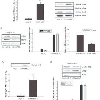 Reversal of PTEN promoter methylation by miR-146b in TAMR