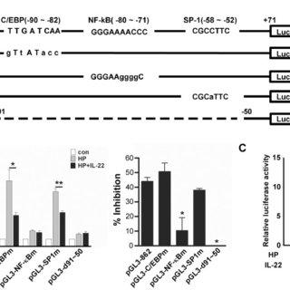 A, EMSA supershift study of CCL20-specific NF-κB