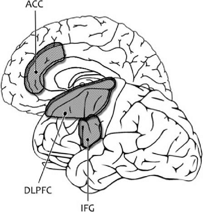 The self-regulation/self-control network. Brain regions