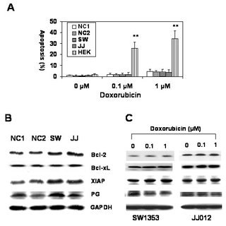 Doxorubicin resistance mechanisms in chondrosarcoma cells