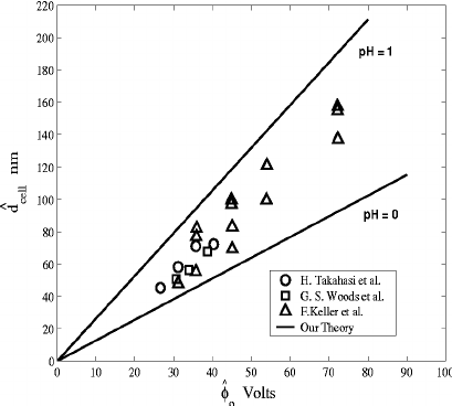 Comparison of theoretical prediction of cell diameter