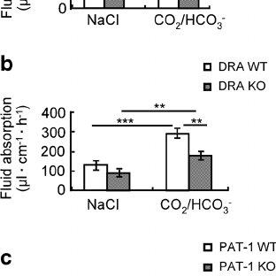 (PDF) Slc26a6 (PAT-1) mediates dipeptide and CO2/HCO3