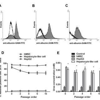 Immunofluorescent staining of hepatocyte-like cells and