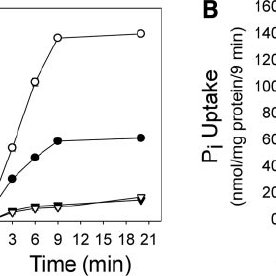 Effects of G6Pase- ␣ on G6P transport activity of G6PT