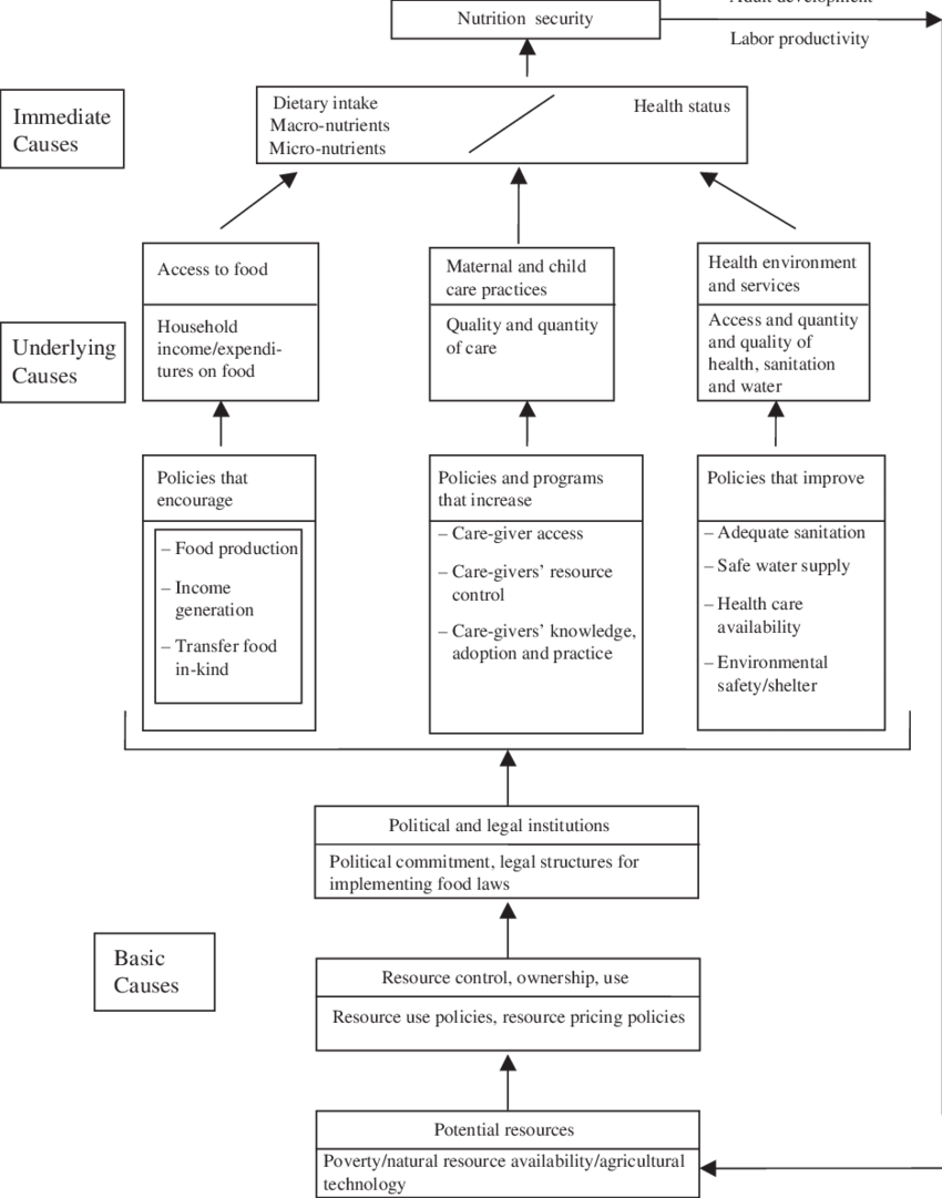 medium resolution of 1 food and nutrition security a conceptual framework source smith and haddad