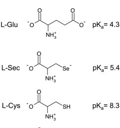 diagrams of relevant amino acids and the associated side chain pkas amino acids are depicted [ 785 x 1241 Pixel ]