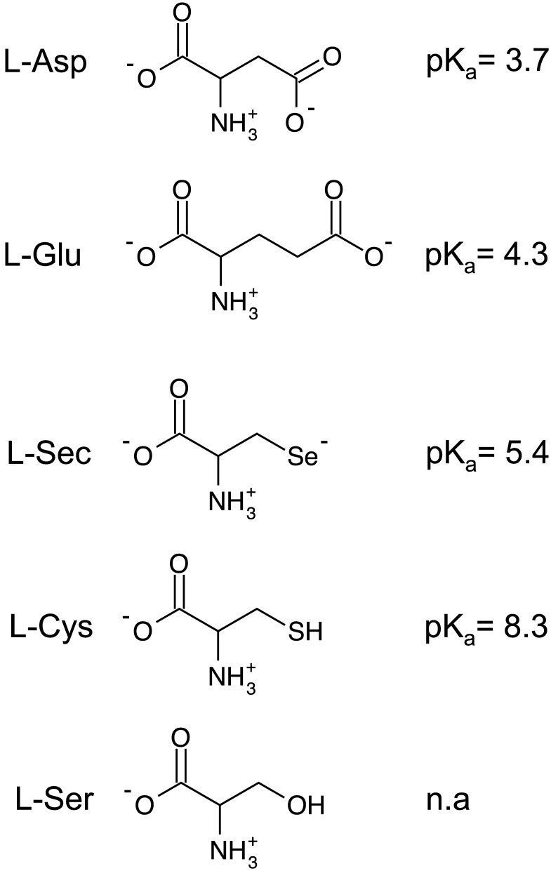 hight resolution of diagrams of relevant amino acids and the associated side chain pkas amino acids are depicted
