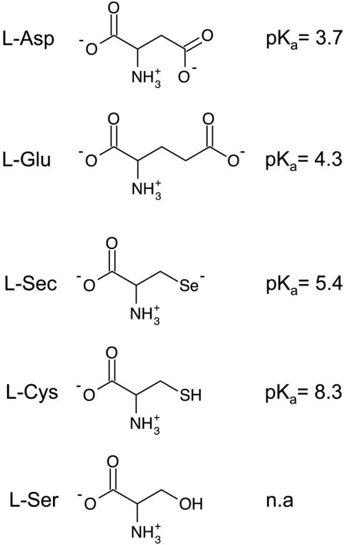 small resolution of diagrams of relevant amino acids and the associated side chain pkas amino acids are depicted