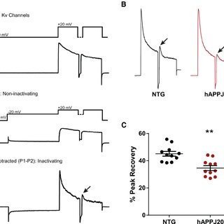 (PDF) Tau-Dependent Kv4.2 Depletion and Dendritic