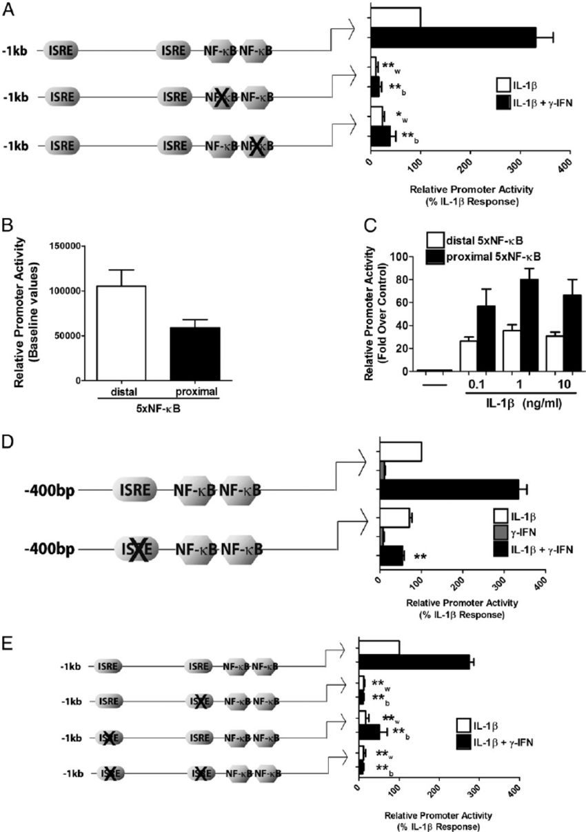 Cytokine-mediated activation of the CXCL10 promoter