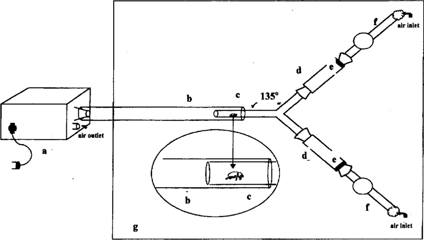 Schematic representation of the Y-tube olfactometer