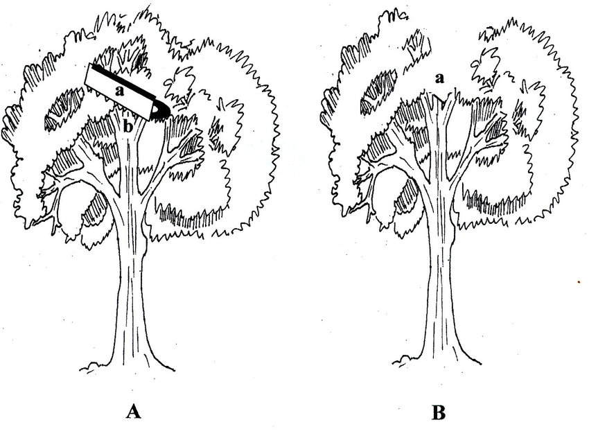 Schematic representation of open-center pruning method. A