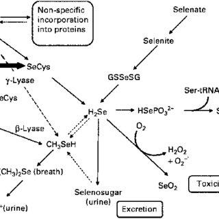(PDF) Selenium bioavailability: Current knowledge and