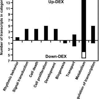 Comparison of Dex effects on postnatal small intestine and