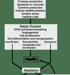 theoretical schema for the pathogenesis of chronic kidney disease ecm extracellular matrix see text [ 714 x 1328 Pixel ]