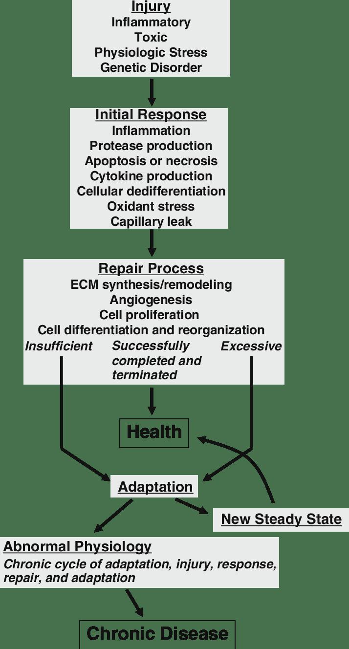 medium resolution of theoretical schema for the pathogenesis of chronic kidney disease ecm extracellular matrix see text