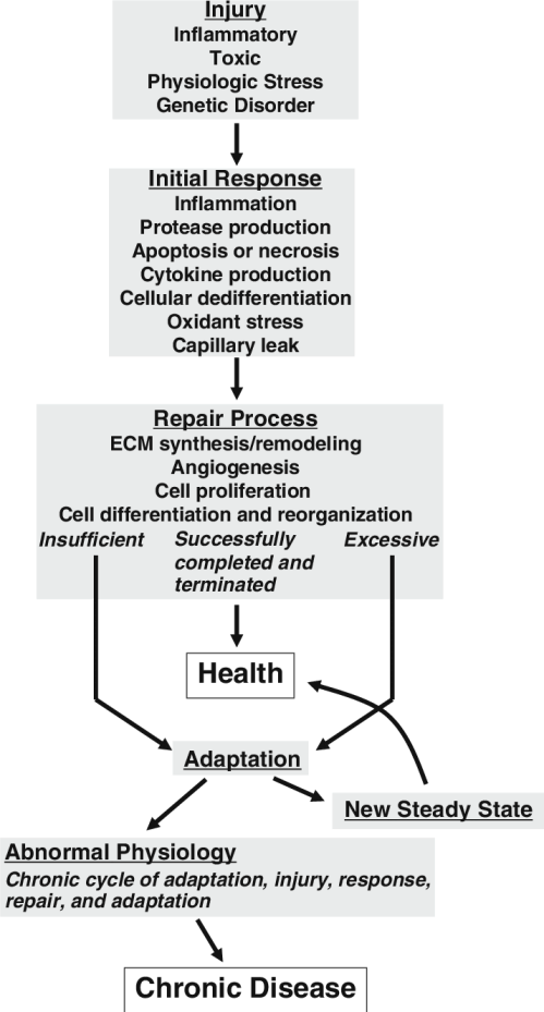 small resolution of theoretical schema for the pathogenesis of chronic kidney disease ecm extracellular matrix see text