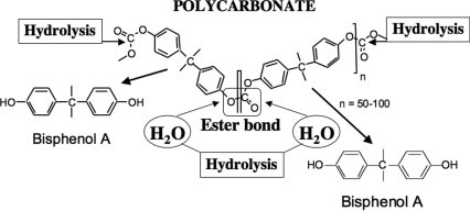 Schematic diagram depicting hydrolysis of the ester bond