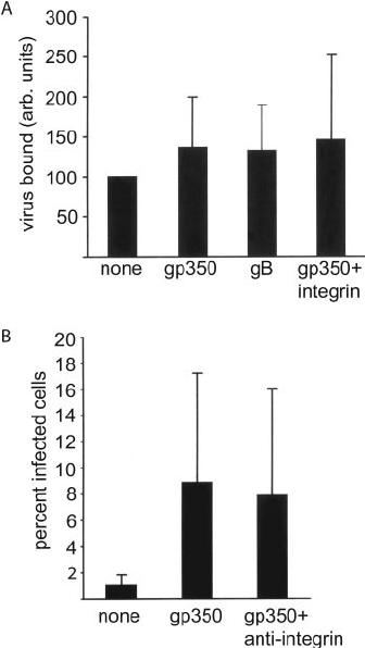 Antibodies to gp350/220 Enhance the Ability of Epstein