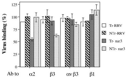 Alignment of rotavirus RRV protein VP7 (aa 161 to 169) with the ...