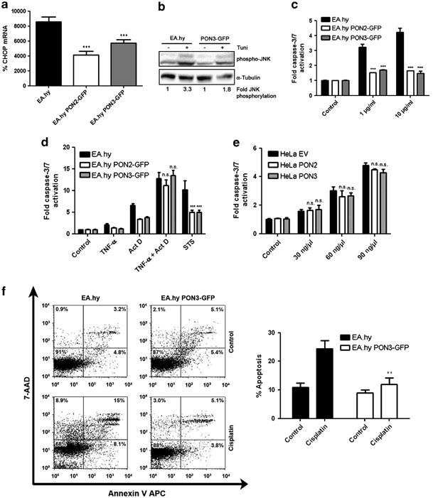 PON3 is upregulated in cancer tissues and protects against