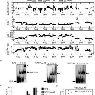 (PDF) A novel RNA binding surface of the TAM domain of