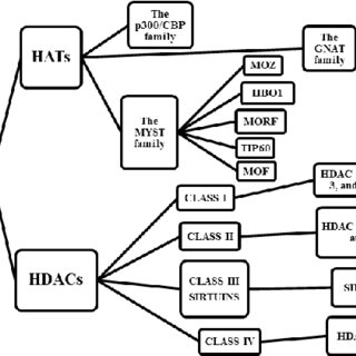 Anticancer effects of histone deacetylase (HDAC