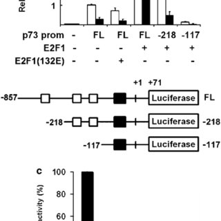 Role of COX-2 in celecoxib-mediated apoptosis. (a) cleaved