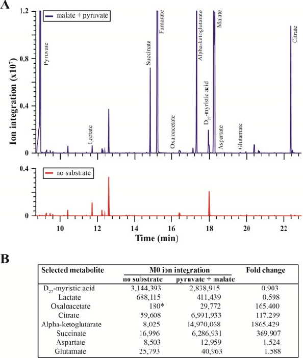 mouse skeletal diagram samsung dryer wiring the selected metabolite profile of mitochondria isolated from muscle obtained by gc ms selective ion monitoring sim mode