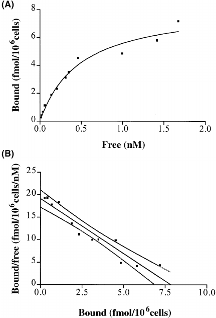 Saturation analysis of [ 125 I]IL-1 α binding to CHO-hIL