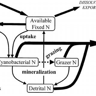 A hierarchy of explanation for patterns of nitrogen