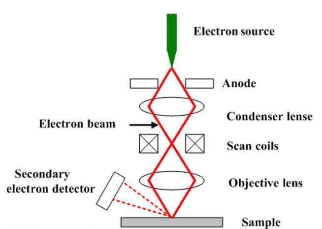 A schematic diagram of scanning electron microscope.[178