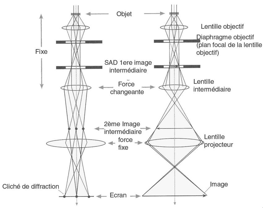 : Schéma de la colonne d'un microscope électronique en